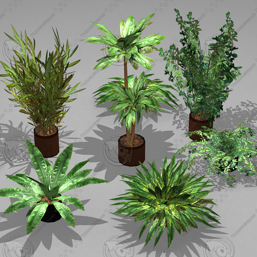 Potted Plant Pack (7 potted plant) royalty-free 3d model - Preview no. 1