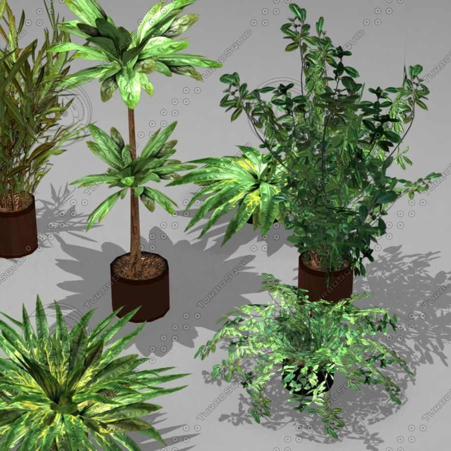 Potted Plant Pack (7 potted plant) royalty-free 3d model - Preview no. 4