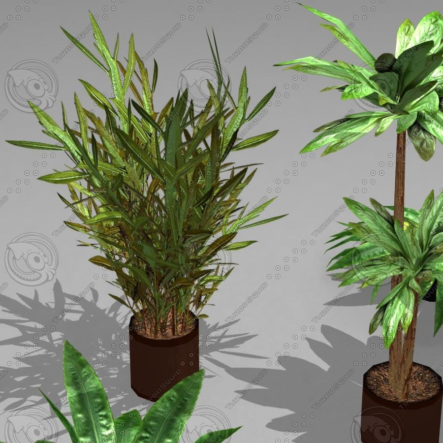Potted Plant Pack (7 potted plant) royalty-free 3d model - Preview no. 5