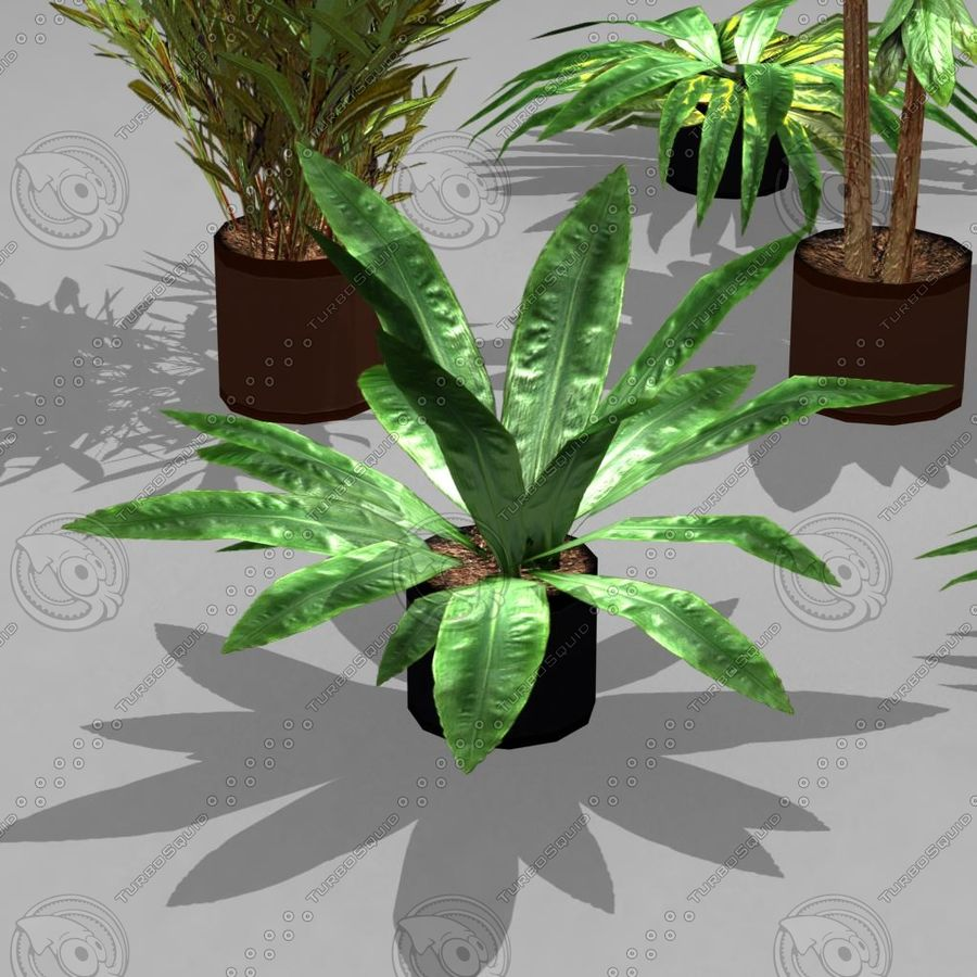 Potted Plant Pack (7 potted plant) royalty-free 3d model - Preview no. 3
