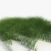 Herbe à faible teneur en poly (1) 3d model