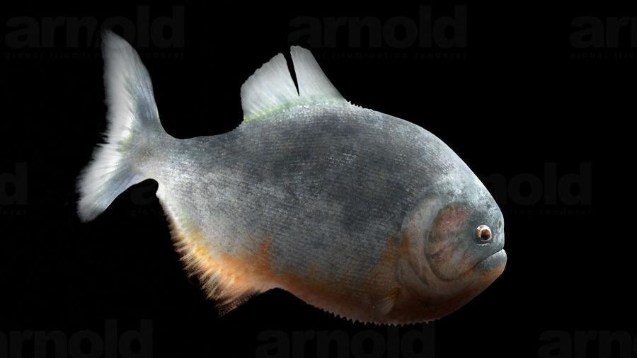 Piranha royalty-free 3d model - Preview no. 5