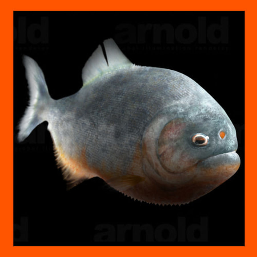 Piranha royalty-free 3d model - Preview no. 1