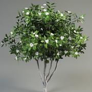 Árvore magnólia 3d model