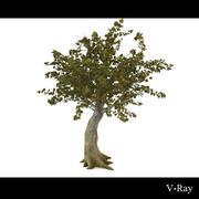 나무 3d model