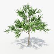 Tree_02 3d model
