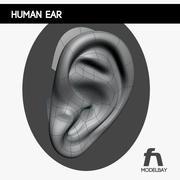 Menselijk oor 3d model
