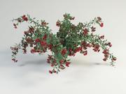 Krzew Weigela 3d model