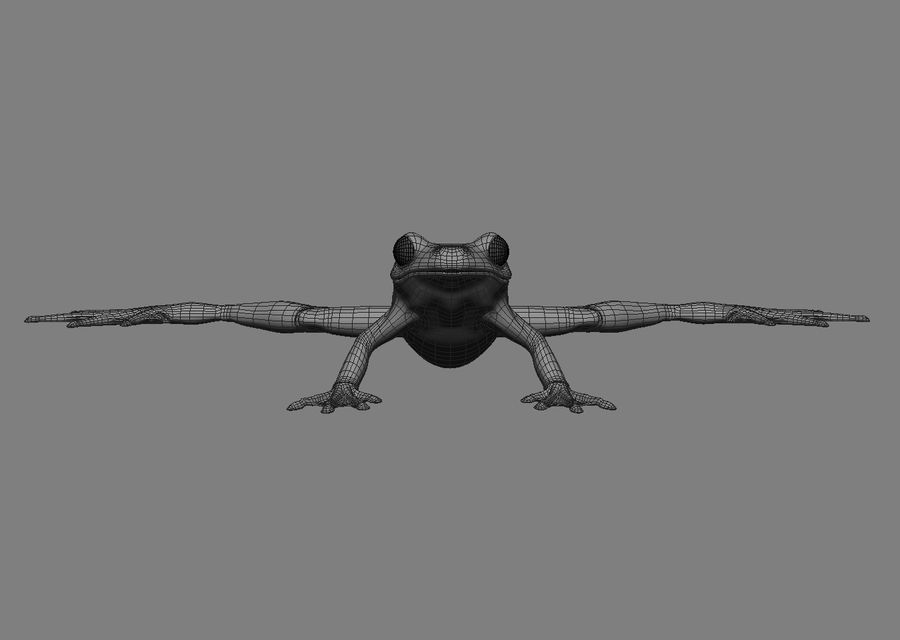 Frog royalty-free 3d model - Preview no. 4