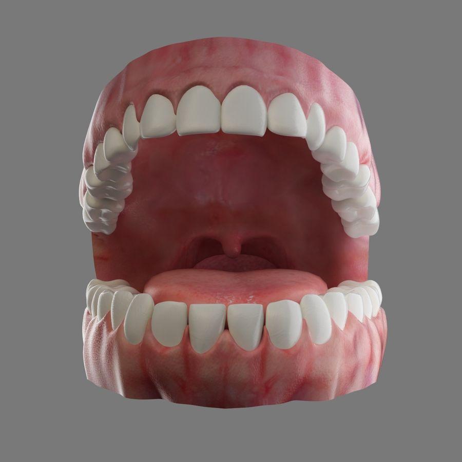 人类的牙齿 royalty-free 3d model - Preview no. 4