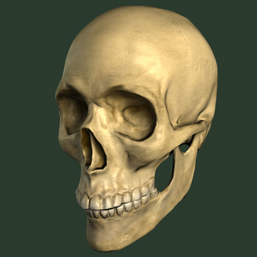 skull royalty-free 3d model - Preview no. 9
