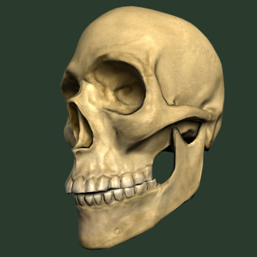 skull royalty-free 3d model - Preview no. 5