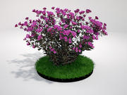 Dark Horse Weigela 3d model