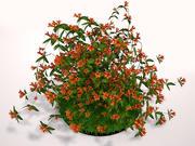 Tangerine Beauty Crossvine 3d model