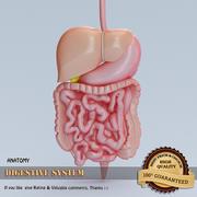 Système digestif 3d model