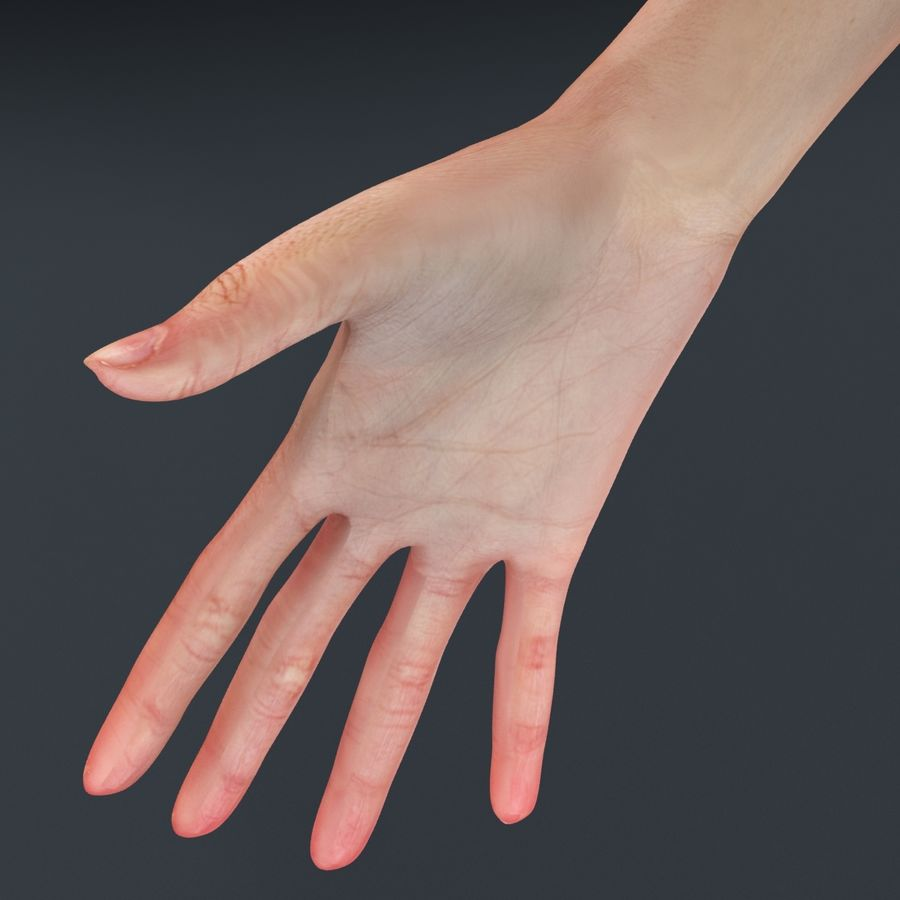 Kvinna Anatomi Slim royalty-free 3d model - Preview no. 19