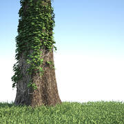 Tronco de árvore coberto por hera 3d model