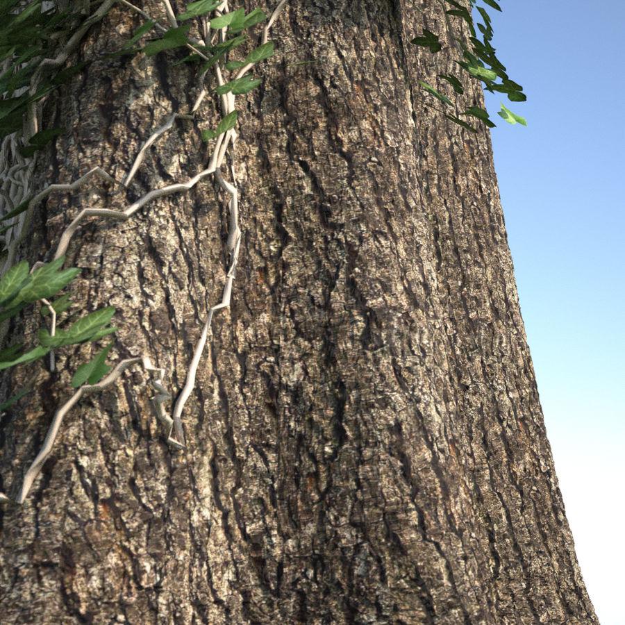 ツタに覆われた木の幹 royalty-free 3d model - Preview no. 2