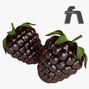 黑莓果实 3d model