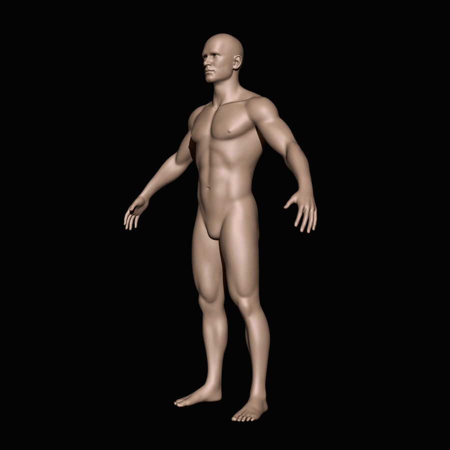 İnsan vücudu royalty-free 3d model - Preview no. 2
