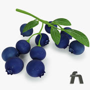 Blueberry fruit 3d model