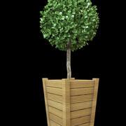bush shrub topiary 3d model