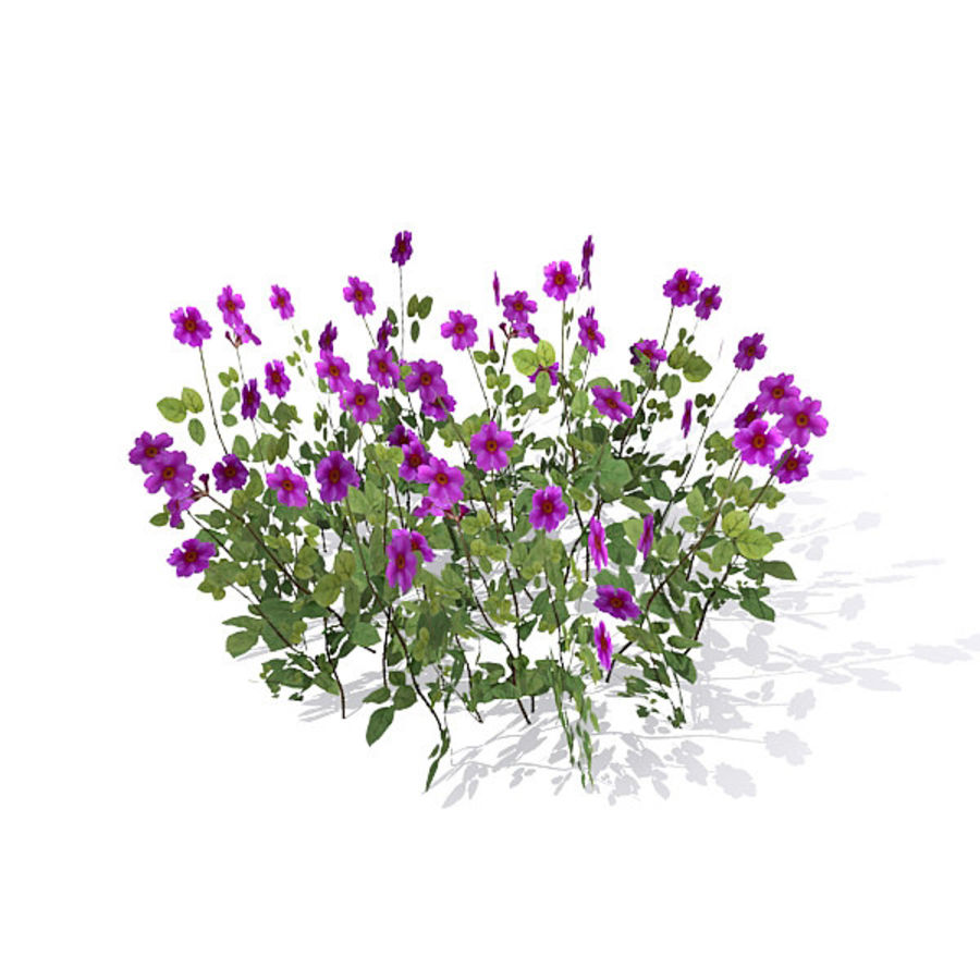 Коровник цветок куст royalty-free 3d model - Preview no. 3