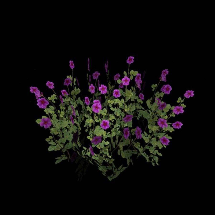Коровник цветок куст royalty-free 3d model - Preview no. 6