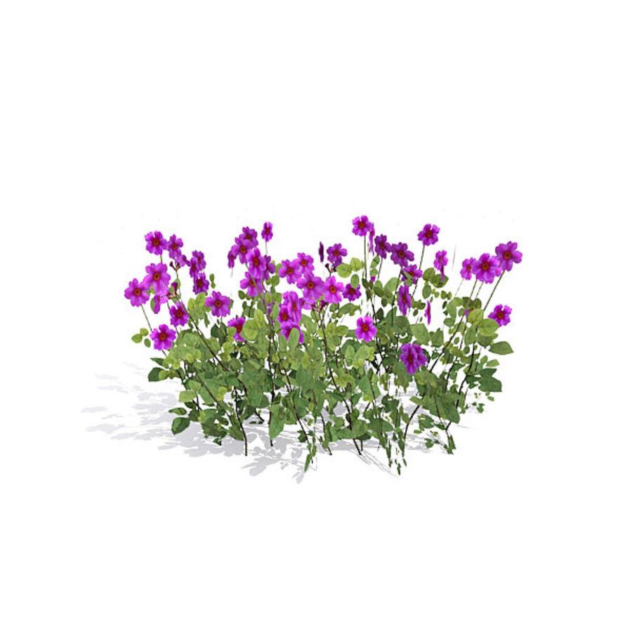 Коровник цветок куст royalty-free 3d model - Preview no. 4