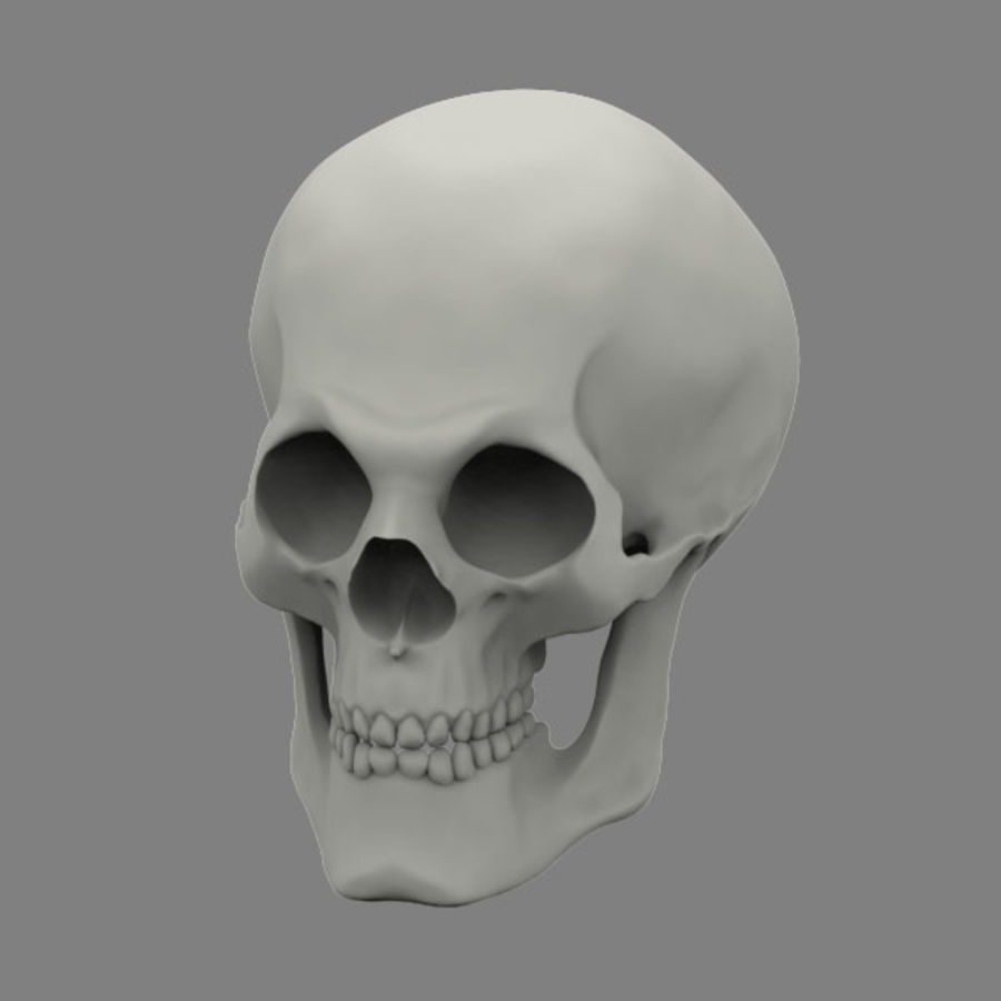 Skull royalty-free 3d model - Preview no. 7