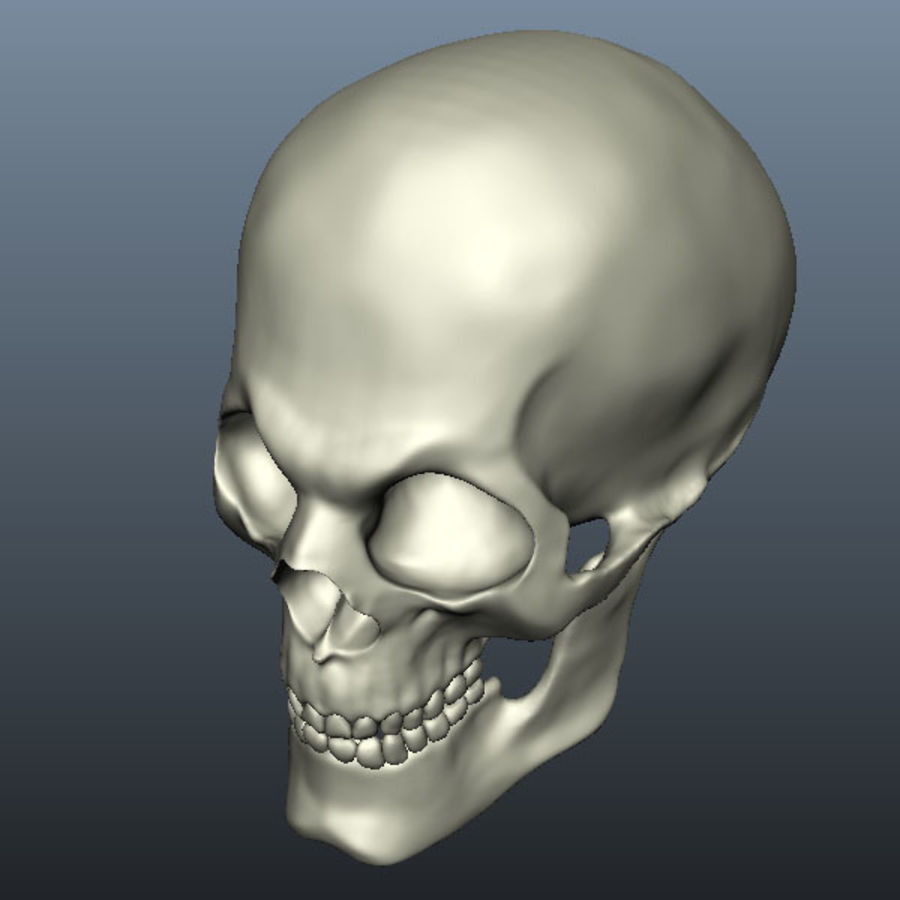 Skull royalty-free 3d model - Preview no. 12