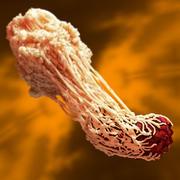 Macrophage feeding a Bacterium 02 3d model