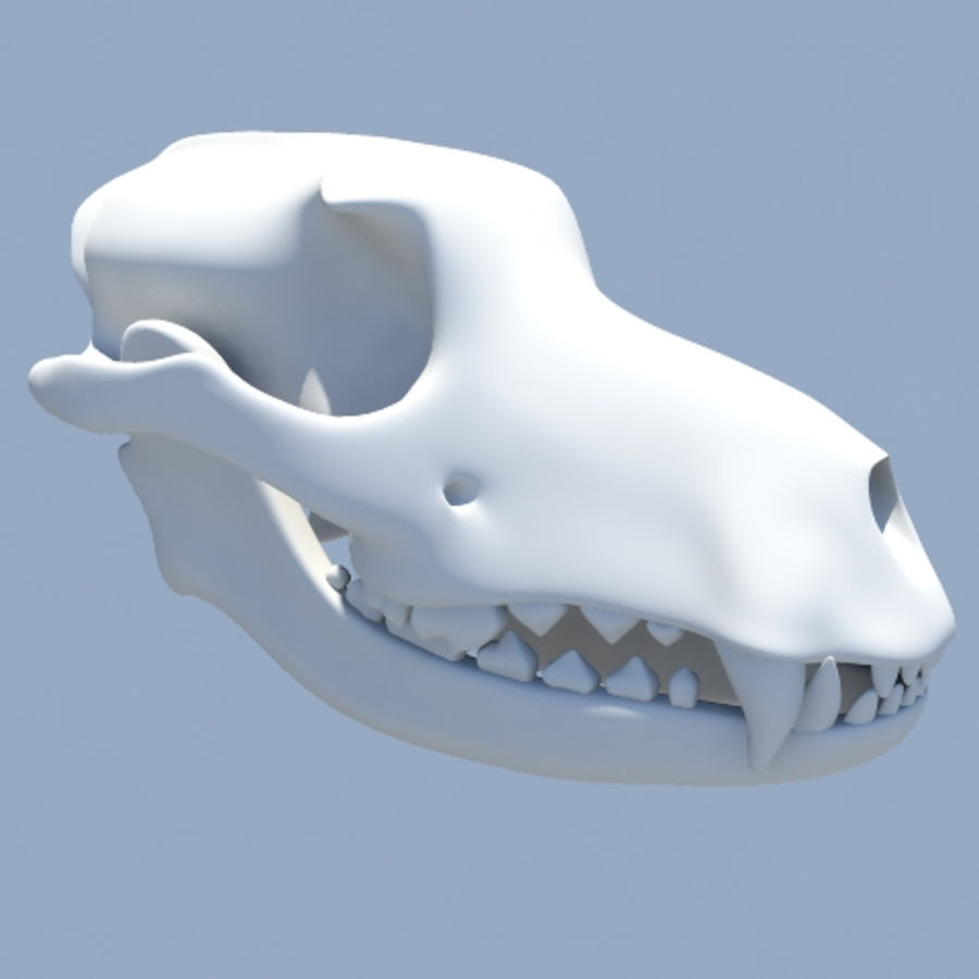 dog skull royalty-free 3d model - Preview no. 7
