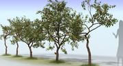 Apple Tree Set 3d model