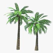 Palmiye ağaçları 3d model