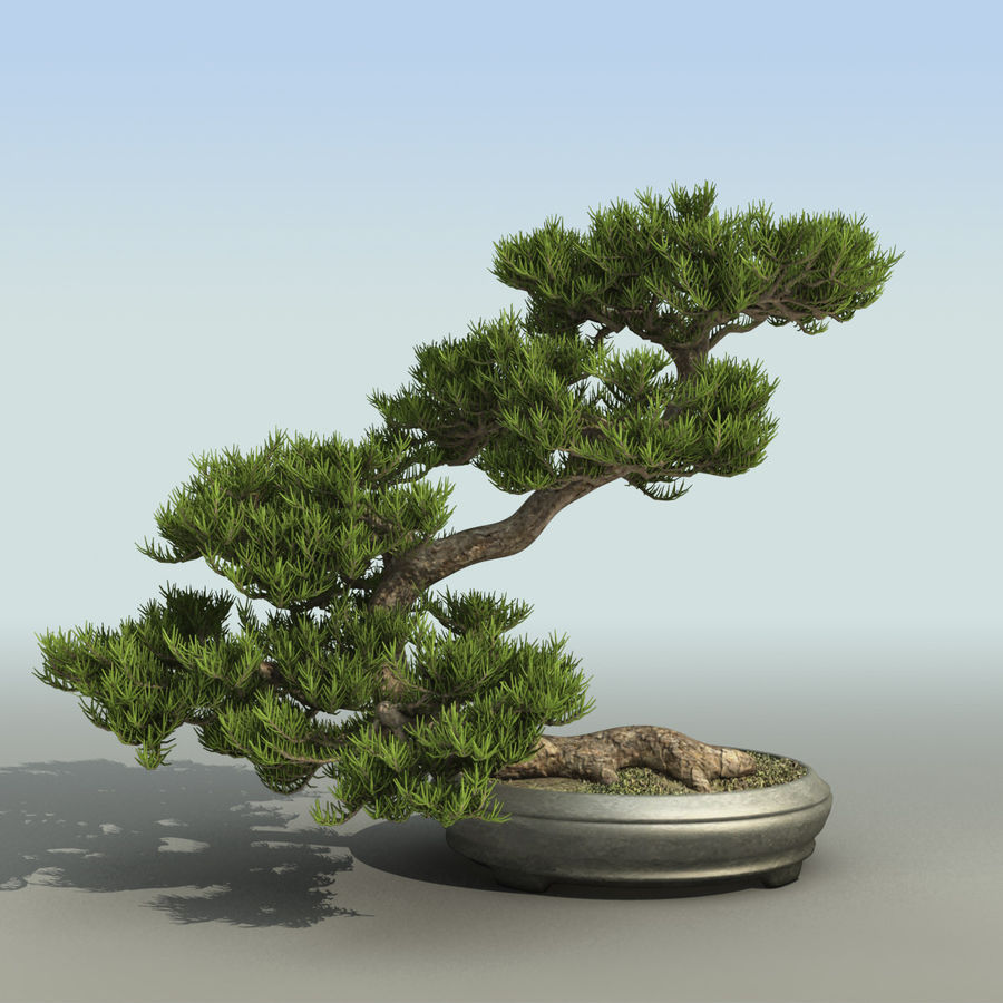 Bonsai royalty-free 3d model - Preview no. 4