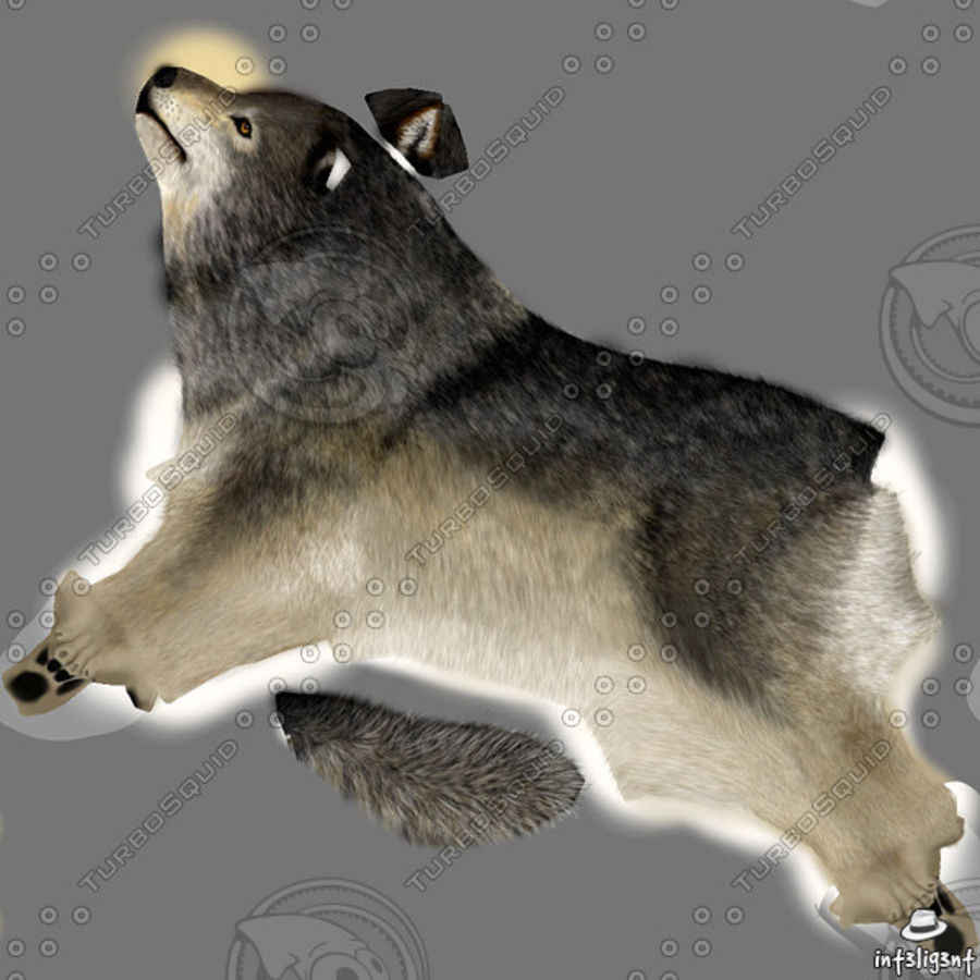 Wolf royalty-free 3d model - Preview no. 10