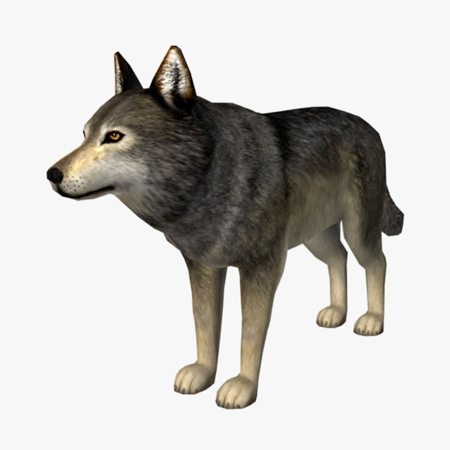 Wolf royalty-free 3d model - Preview no. 1