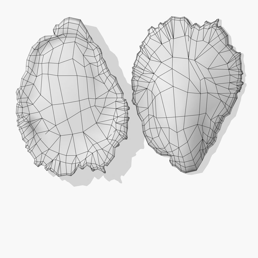 Oyster royalty-free 3d model - Preview no. 5