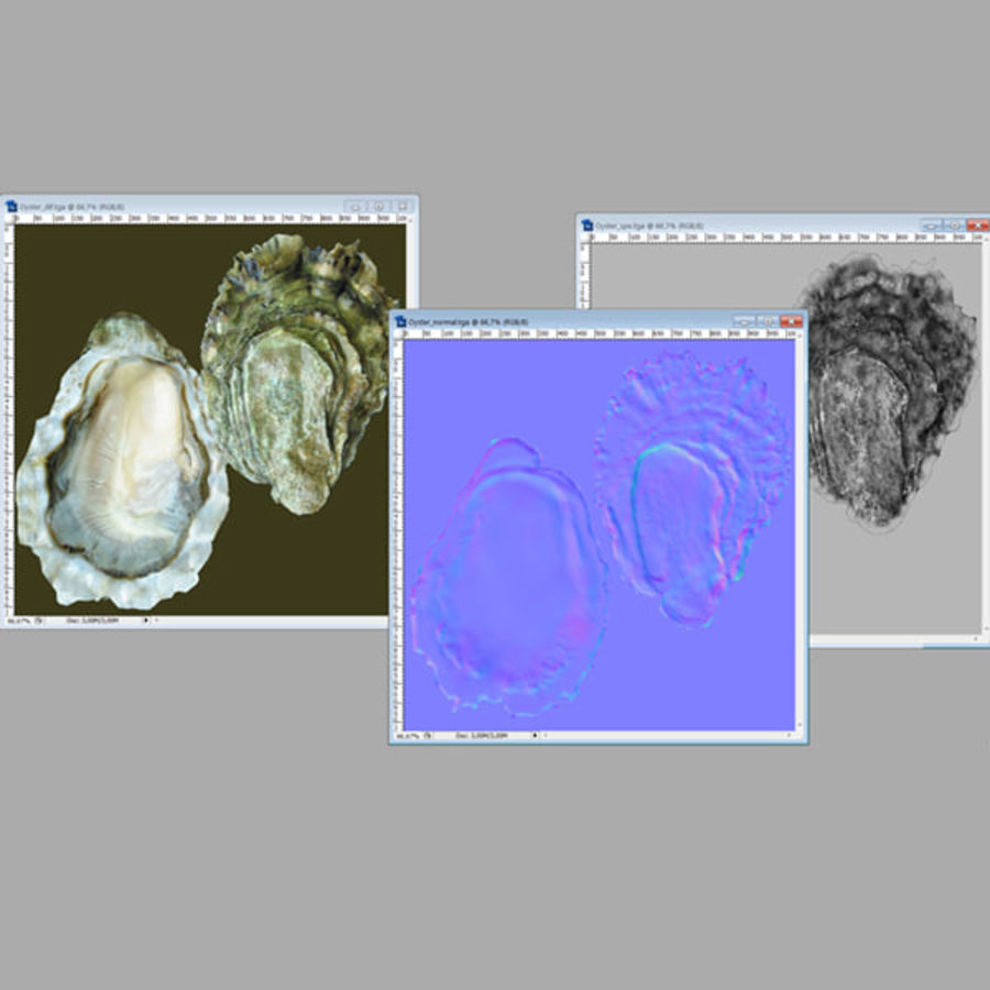 Oyster royalty-free 3d model - Preview no. 7