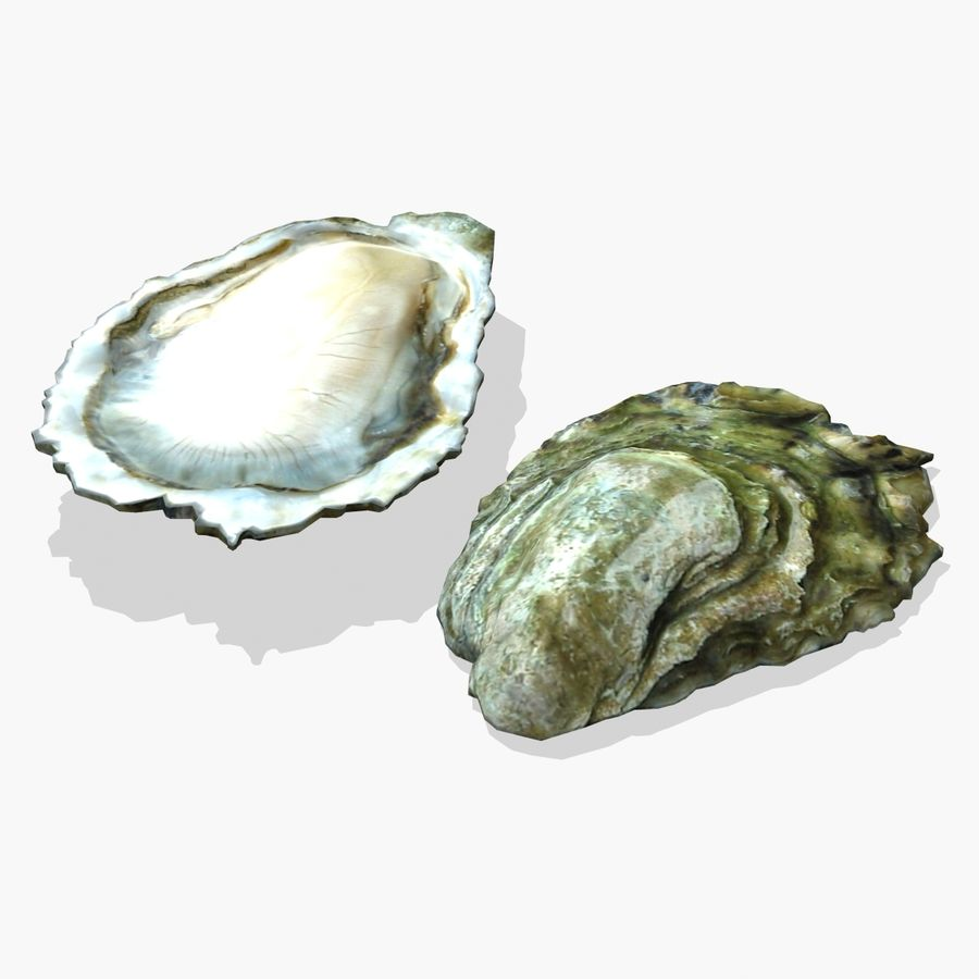 Oyster royalty-free 3d model - Preview no. 2