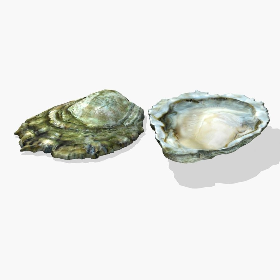 Oyster royalty-free 3d model - Preview no. 3