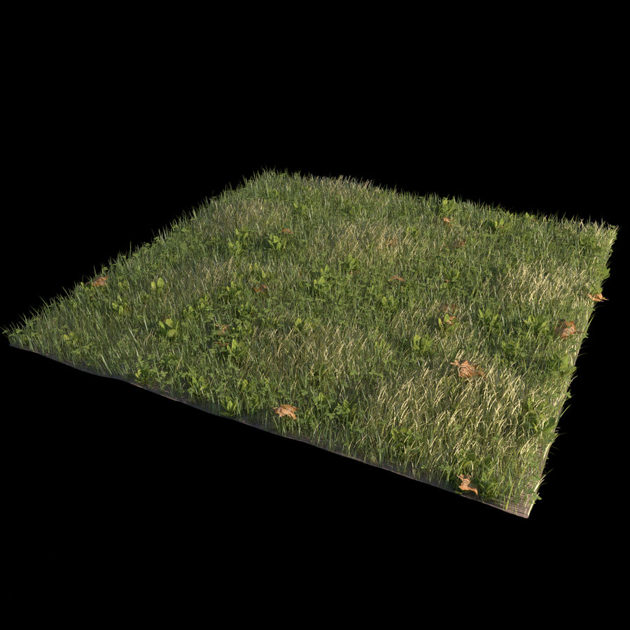 Front Yard (Terrain 2) royalty-free 3d model - Preview no. 1