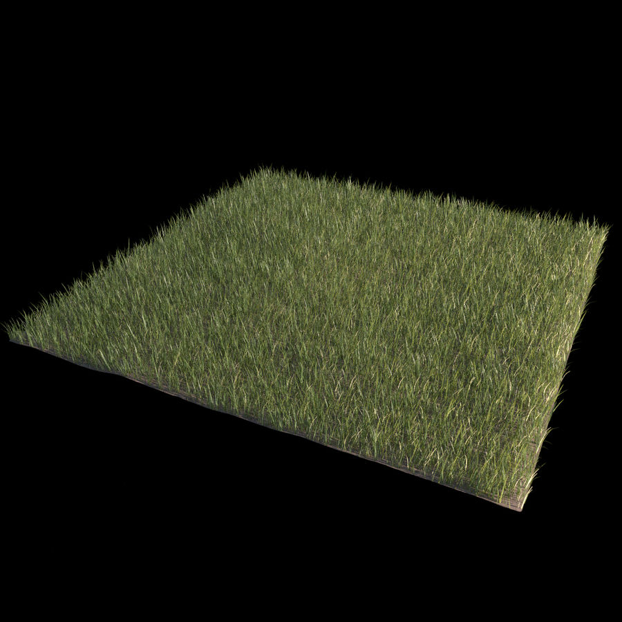 Front Yard (Terrain 2) royalty-free 3d model - Preview no. 4