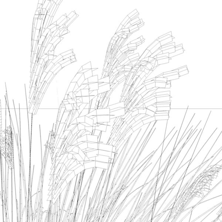 miscanthus sinensis royalty-free 3d model - Preview no. 5