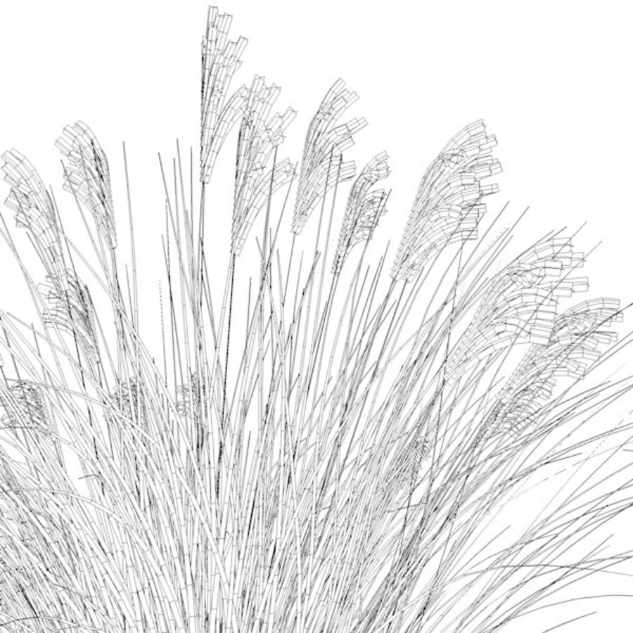 miscanthus sinensis royalty-free 3d model - Preview no. 3