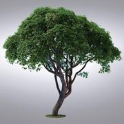 HI Realistic Series Tree - 106 3d model