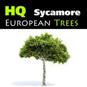 European Sycamore 3d model