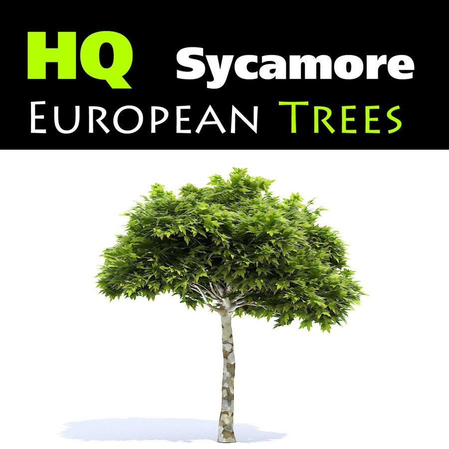 Jawor europejski royalty-free 3d model - Preview no. 1