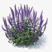Meadow Sage (Salvia nemorosa) 3d model